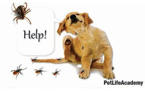 home remedies to remove ticks from dogs