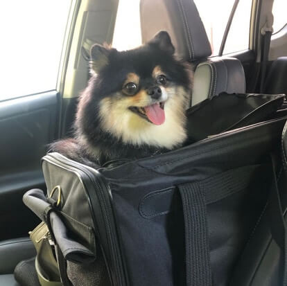 Best Airline Approved Pet Carrier