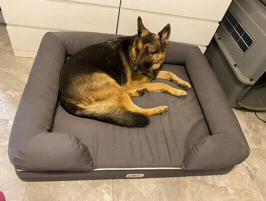 Best Dog Bed for Arthritic Dogs