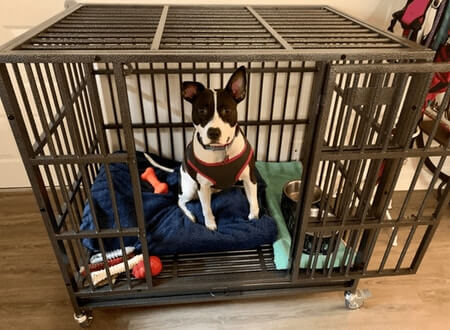 Best Heavy Duty Dog Crate