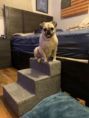 How to Build A DIY Dog Ramp for Stairs